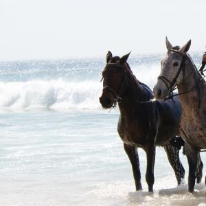 cavalos_muda